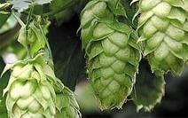 Label voor kwaliteitsbier gebrouwen van Belgische hop | Bespreking Stakeholders | Scoop.it