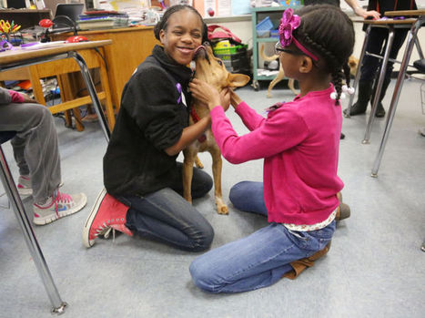 Dogs in classroom helping students learn empathy | Child's Play, Education & Development | Scoop.it