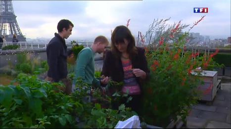 [vidéo] Les toitures végétales gagnent du terrain en ville | La HighLine de Cannes | Scoop.it