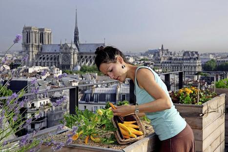Un potager sur le toit? L'idée germe en Suisse | Agriculture urbaine et rooftop | Scoop.it