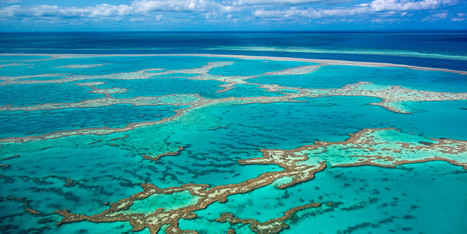 Great Barrier Reef Sediment Dump Approved For One Of World's Most Fragile Ecosystems   Ecosystems at Risk   Scoop.it