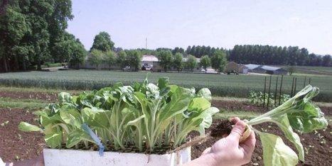 A Bergerac, l'avenir de l'Institut du tabac se scelle aujourd'hui | Agriculture en Dordogne | Scoop.it