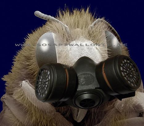 Trois études mettent en cause les insecticides néonicotinoïdes | Abeilles, intoxications et informations | Scoop.it