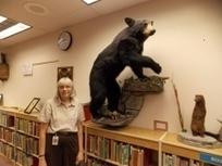 Wildlife Display!   Creativity in the School Library   Scoop.it
