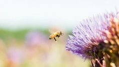 Limoges va être équipée d'un pollinarium pour prévenir les allergies - France 3 Limousin   Steribed   Scoop.it