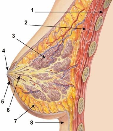 Cancer du sein : un nouveau marqueur éviterait des traitements ... - Futura Sciences   Medical biology science news   Scoop.it
