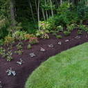 The Benefits of Black Bark Mulch in Your Gardens   West Coast Bark Products Inc.   Scoop.it