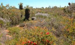 Même chez les plantes, l'habit ne fait pas le moine | Réseau Tela Botanica | Scoop.it