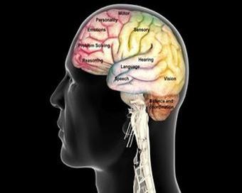 CEREBRO ADOLESCENTE: Reflexiones de expertos en Neurociencia: cómo aprende el cerebro | REFLEXIONES SOBRE EDUCACIÓN | Scoop.it