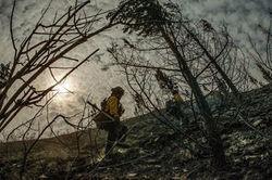 Sécheresse: les arbres en perdent l'appétit du CO2 - Journal de l'environnement | Biodiversité | Scoop.it