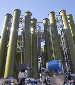 Des micro-algues pour fabriquer du biopétrole | Agr'energie | Scoop.it
