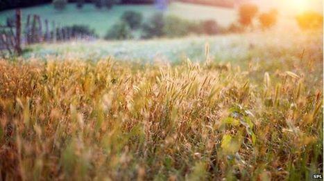 Organic farming 'benefits biodiversity' - BBC News | bolets.cat | Scoop.it