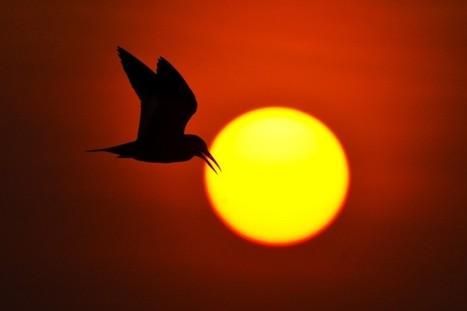 La perte de #biodiversité menace les #écosystèmes de la #planète | Développement durable et efficacité énergétique | Scoop.it