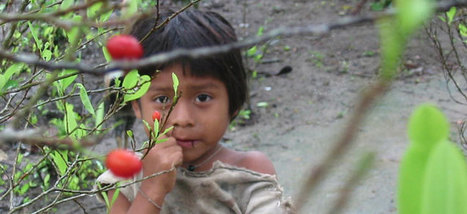 Colombia's air force sprays indigenous land with pesticides 'indiscriminately' : Christian Aid Colombia Reports | Drugs and Human Rights | Scoop.it