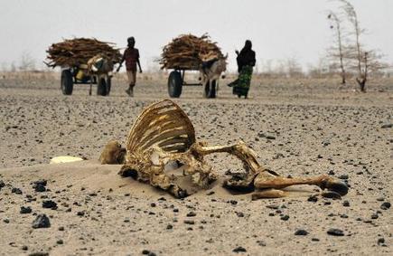 Climat: des ONG africaines appellent à aider l'Afrique à s'adapter | Afrique: développement durable et environnement | Scoop.it