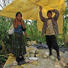 "Biofuels Land Grab: Guatemala's Farmers Lose Plots and Prosperity to ""Energy Independence"" [Slide Show] 