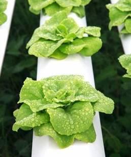 hydroponics | Elisabyron-Business News | Scoop.it
