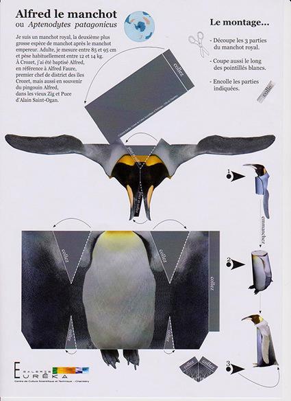 Maquette de #manchot royal à monter #TAAF | Arctique et Antarctique | Scoop.it