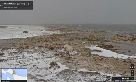 Google muestra los efectos del cambio climático usando Street View | Educacion, ecologia y TIC | Scoop.it