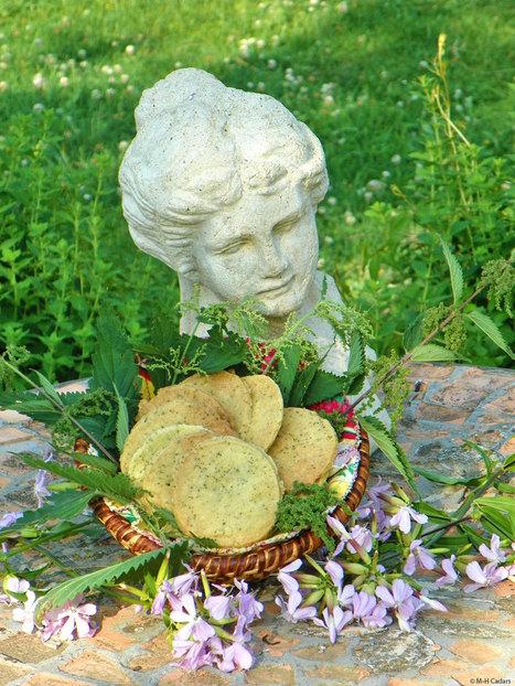 Biscuits de la joie aux graines d'orties | L'info tourisme en Aveyron | Scoop.it