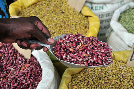 Global Food Crisis May Hit Us 'Very Soon,' IFPRI's Fan Says   Bloomberg   Vertical Farm - Food Factory   Scoop.it