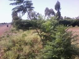 West Kenya Real Estate: 0.75ha parcel of land for sale, Rabuor- Kouta - | Current news across the globe | Scoop.it