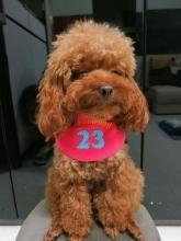 Home Dog Boarding Singapore | Online Pet Store Singapore | Scoop.it