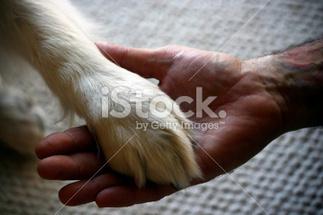 Assurance animaux - images sur le thème du chien | Assurance chien animaux | Scoop.it