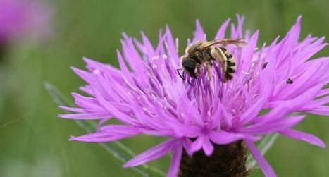 Loi Biodiversité les organisations environnementales françaises refusent un projet sans ambition   OGM, Pesticides, Les alternatives et les problèmes de l'agriculture chimique   Scoop.it