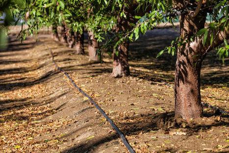 How California Is Winning the Drought | Eureka | Scoop.it