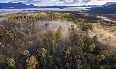Tony Abbott's 'captain's call' over Tasmanian forest humilated Australia, say Greens | GarryRogers Biosphere News | Scoop.it