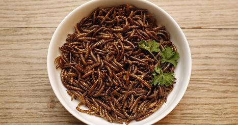 Les insectes sont le futur de l'alimentation humaine | Slate Afrique | Je mange donc je suis | Scoop.it