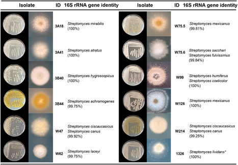 Diversity and functions of volatile organic compounds produced by Streptomyces from a disease-suppressive soil | Discovery of Marine Natural Products | Scoop.it