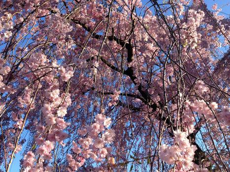 The New York Botanical Garden - New York Times (blog) | Garden | Scoop.it