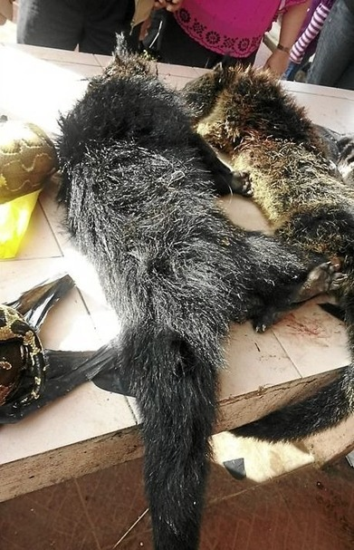 Wildlife Department to probe open sale of bushmeat | Wildlife Trafficking: Who Does it? Allows it? | Scoop.it