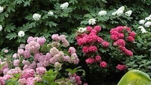 Le jardin préféré des français - Franche-Comté - Le jardin d'Annabelle | So'Ladoix-Serrigny | Scoop.it