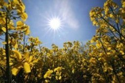 EU report: Brussels biofuels policy hikes food prices by up to 50% | Questions de développement ... | Scoop.it
