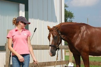 Preventing Heat-Related Problems in Horses | Horse Care | Scoop.it