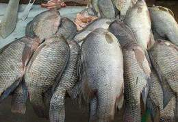 Yalelo anounces US$9.5mn expansion for aquaculture - Sokolako   Aquaculture Directory   Scoop.it