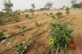 Les cultivateurs peinent à adopter les techniques d'agriculture tenant compte des changements climatiques | Questions de développement ... | Scoop.it
