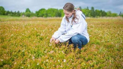 Honey bees a blueberry's best friend | Farming, Forests, Water, Fishing and Environment | Scoop.it