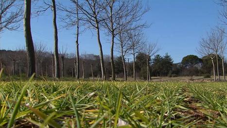 La révolution de l'agroforesterie | du village autonome... | Scoop.it