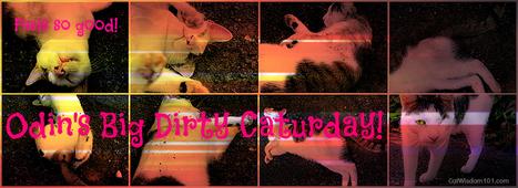 Cat Wisdom 101 | Odin's BIG Dirty Caturday | Cats | Scoop.it