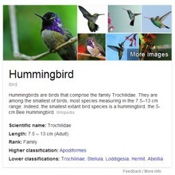 Google Hummingbird: 3 Strategies For Semantic Search | Semantic web, contents, cloud and Social Media | Scoop.it