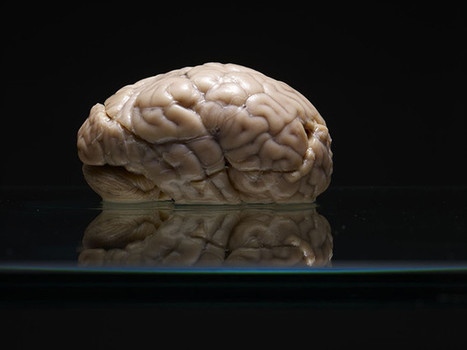 Amazing Photographs Of A Giant, Forgotten Collection Of Human Brains | What's new in Visual Communication? | Scoop.it