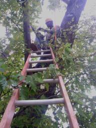 E & E Tree Service: Well established tree service company in Tulsa OK   E & E Tree Service   Scoop.it