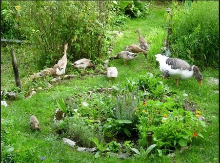 Permaculture News Now ...news and tips on sustainable and regenerative green living!: How Permaculture Can Benefit Society | Permaculture Design | Scoop.it