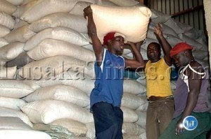 Zambia exported 496,000 tonnes of maize | MAIZE | Scoop.it