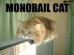 Des LOLcats au catvertising   Communication digitale, social media et CM   Scoop.it