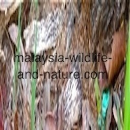 Fruits of Malaysia | Tropical Fruits | Scoop.it